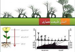دانلود پاورپوینت رایگان معرفی نظم درختان(انسان،طبیعت،معماری)